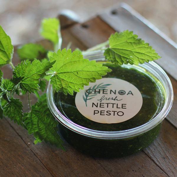 Chenoa Nettle Pesto
